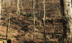 WV: Tyler County - 206 Acres