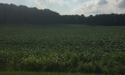 OH:Tuscarawas County-110 Acres