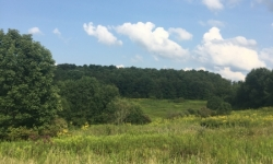 OH:Tuscarawas County 97 Acres